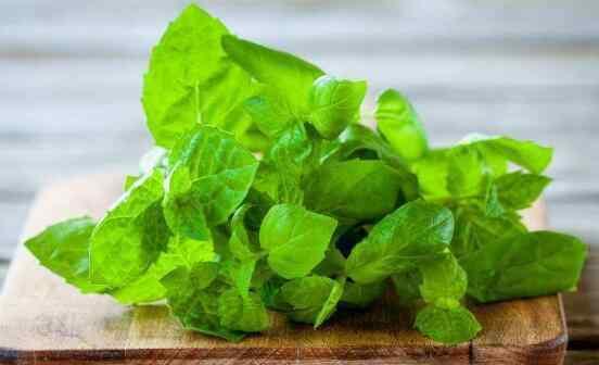 薄荷的禁忌症 薄荷菜的功效与作用及禁忌