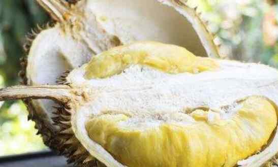 榴莲和菠萝蜜有什么区别 榴莲蜜和菠萝蜜的区别